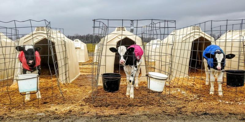 Social Distancing - Farmer Style