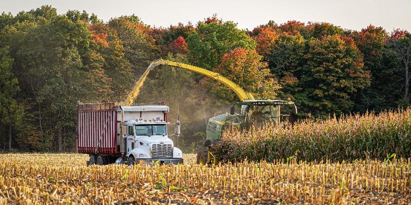 Corn Harvest on the Farm