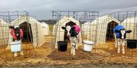 Caring for our Cows During the Cold Season